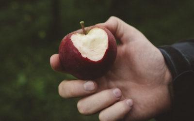 Apfelernte im Alten Land beim Herzapfelhof