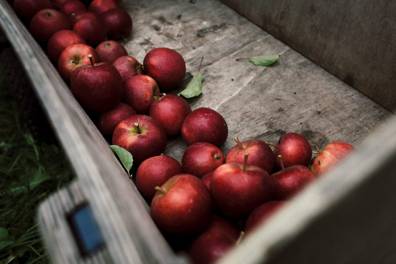 Äpfel im Wagen auf dem Herzapfelhof